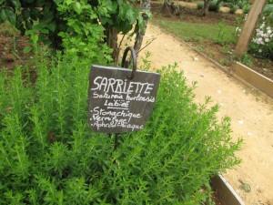 Sarriette ( anti-infectieuse, aromatique)