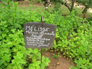 Mélisse ( digestive, calmante, rafraichissante)