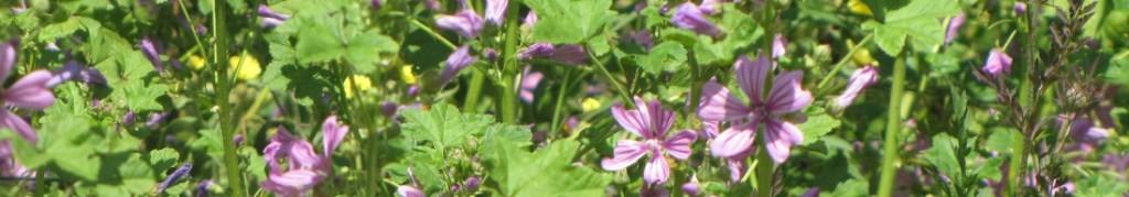 Bando plantes et decouvertes